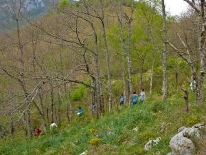 Prácticas de ecología en Caso (Asturias), en la ladera opuesta al Monte Allende. Rodeados de Quercus pyrenaica.