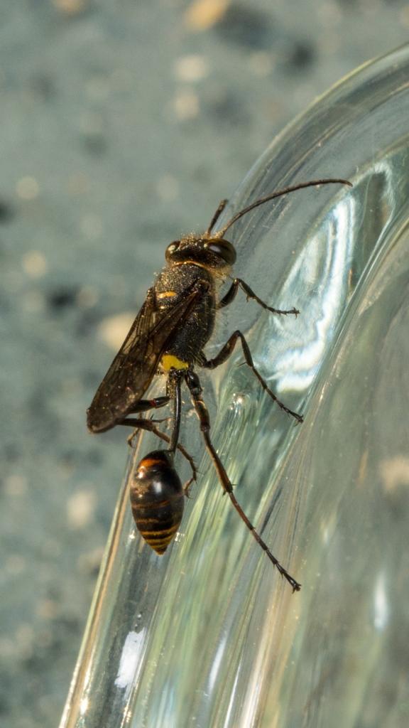 wasp101